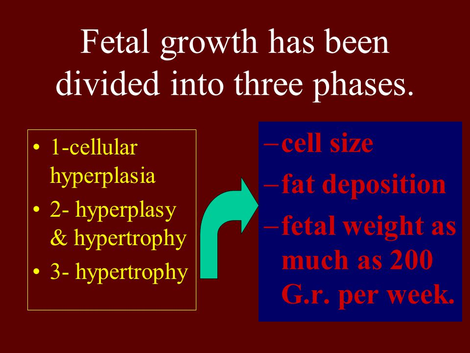 Fetal growth has been divided into three phases. 1-cellular hyperplasia 2- hyperplasy & hypertrophy 3- hypertrophy  cell size  fat deposition  feta