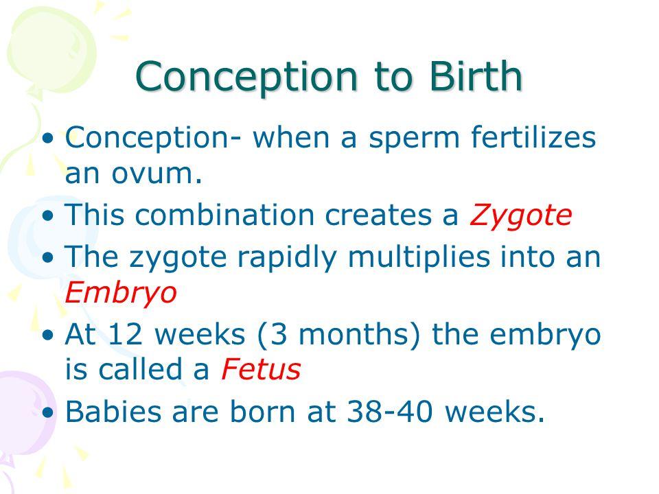 Conception to Birth Conception- when a sperm fertilizes an ovum.