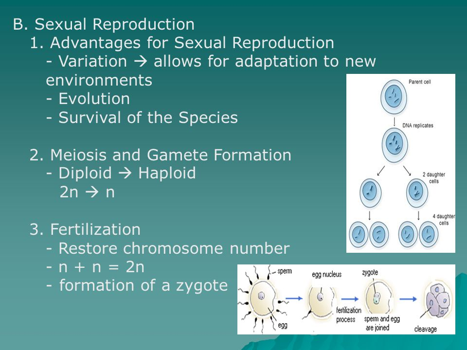 B. Sexual Reproduction 1. Advantages for Sexual Reproduction - Variation  allows for adaptation to new environments - Evolution - Survival of the Spe