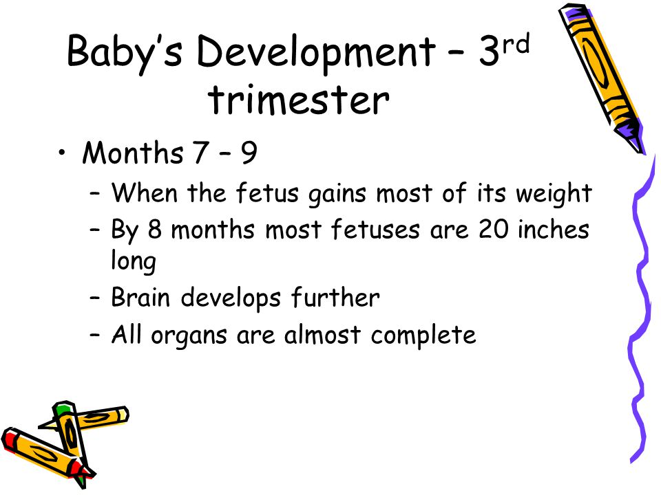 Baby's Development – 3 rd trimester Months 7 – 9 –When the fetus gains most of its weight –By 8 months most fetuses are 20 inches long –Brain develops further –All organs are almost complete