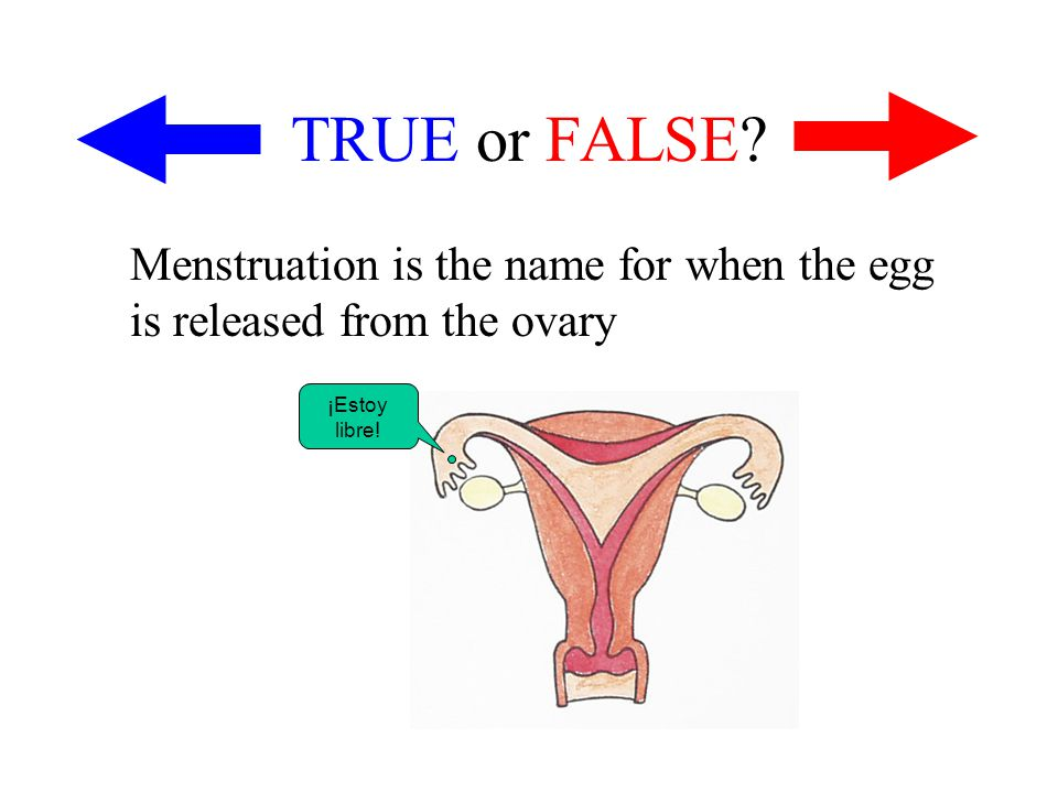 TRUE or FALSE? Menstruation is the name for when the egg is released from the ovary ¡Estoy libre!