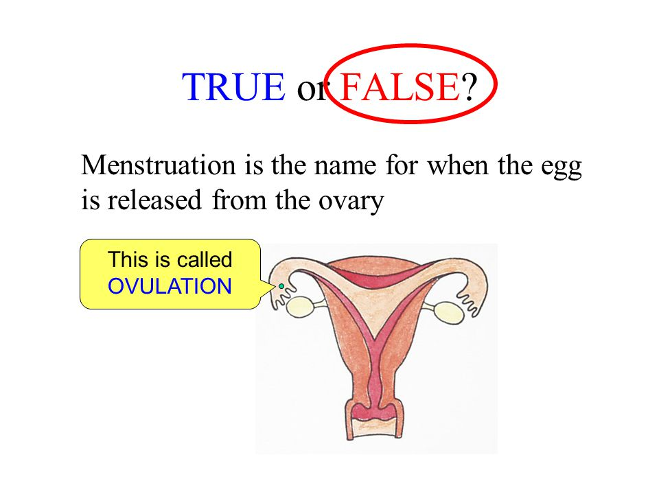 TRUE or FALSE? Menstruation is the name for when the egg is released from the ovary This is called OVULATION