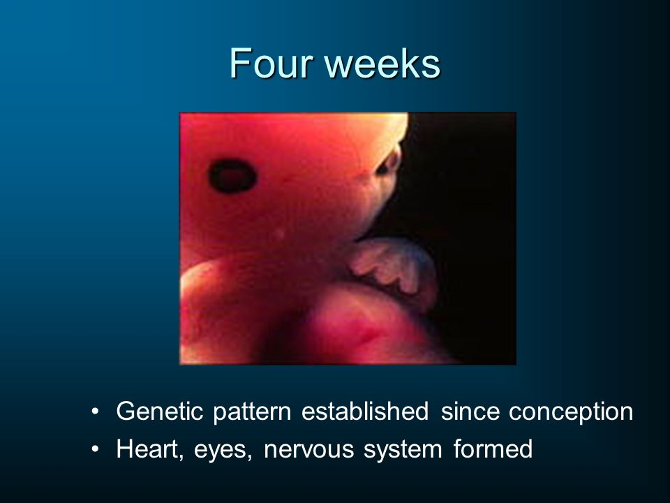 Four weeks Genetic pattern established since conception Heart, eyes, nervous system formed