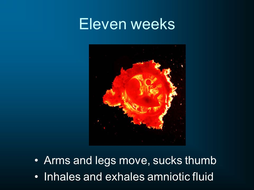 Eleven weeks Arms and legs move, sucks thumb Inhales and exhales amniotic fluid