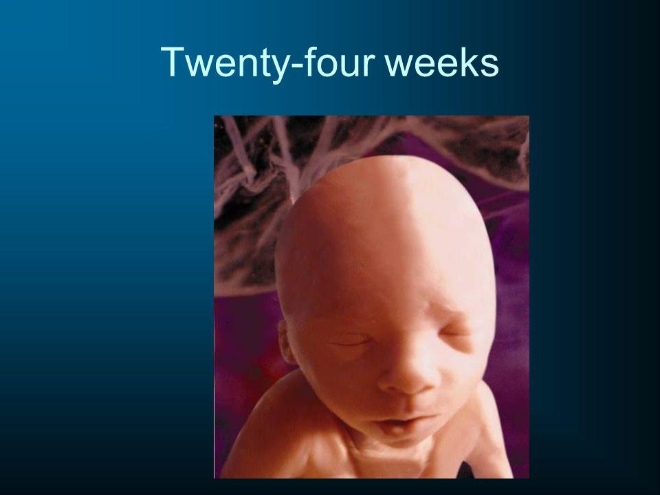 Twenty-four weeks