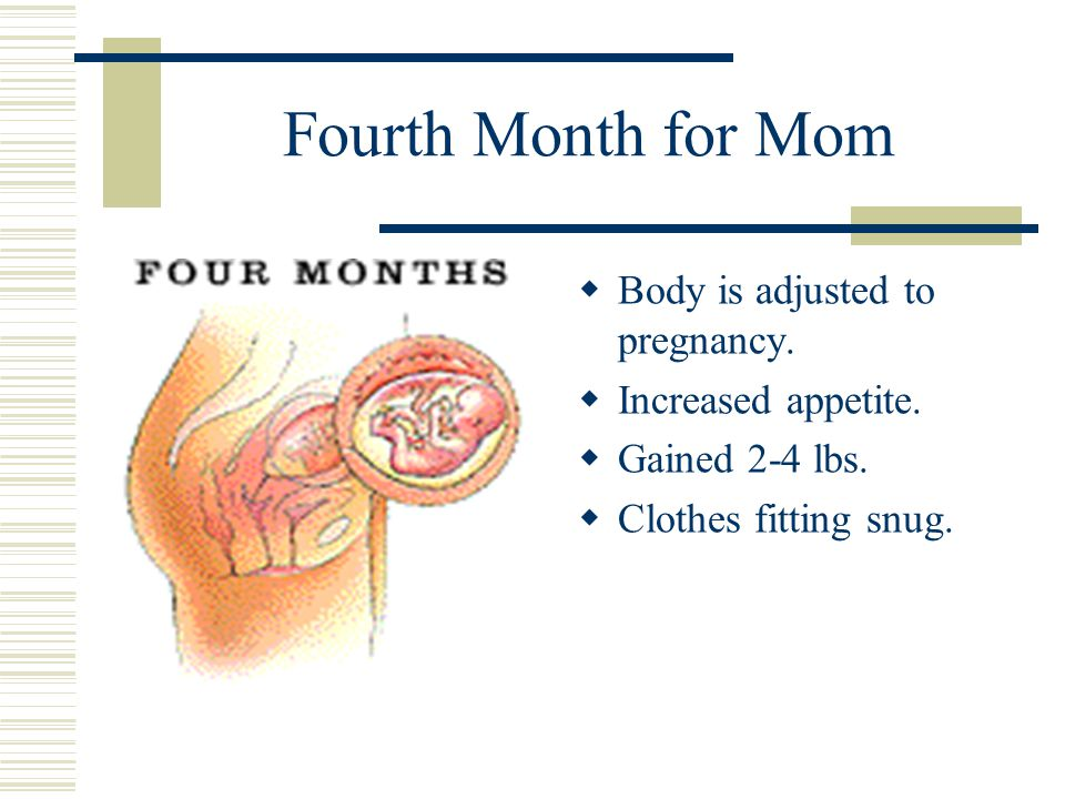Fourth Month for Mom  Body is adjusted to pregnancy.