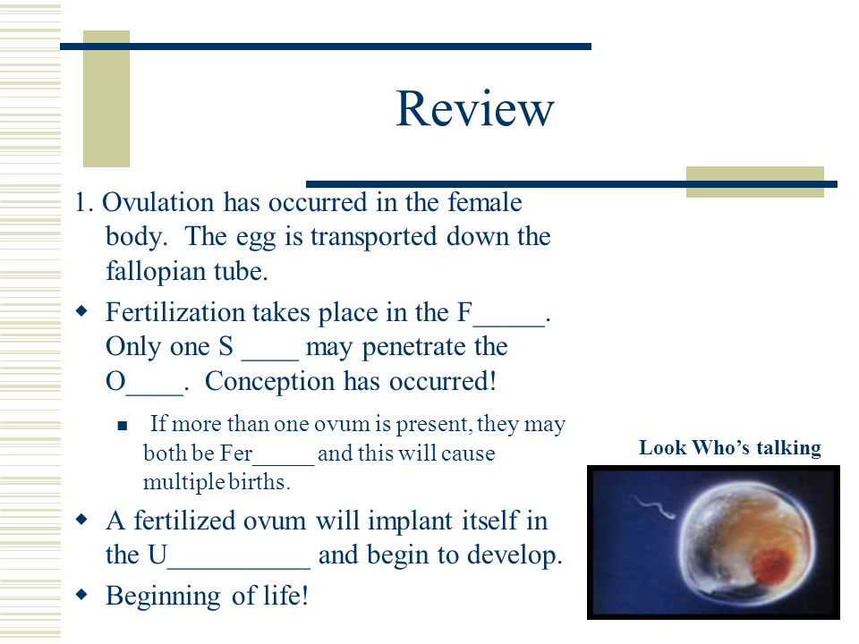 Review 1.Ovulation has occurred in the female body.