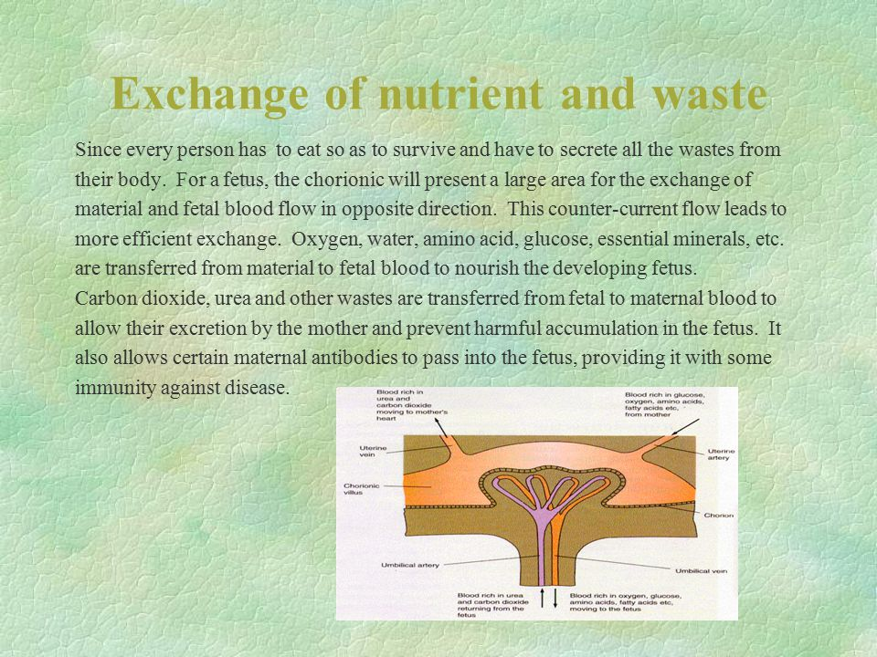 Exchange of nutrient and waste Since every person has to eat so as to survive and have to secrete all the wastes from their body. For a fetus, the cho