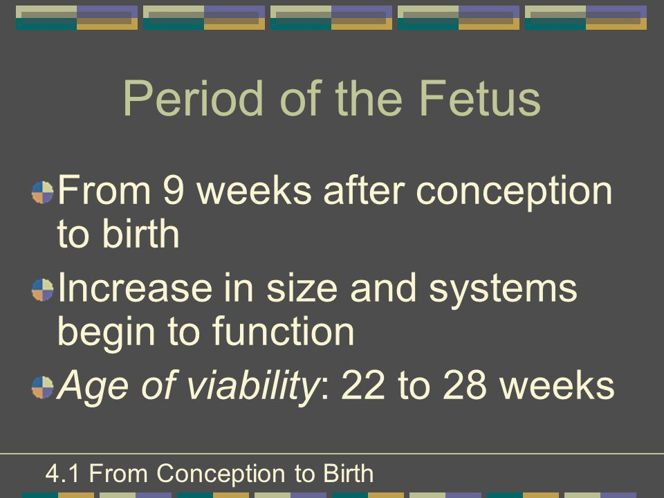 Period of the Fetus From 9 weeks after conception to birth Increase in size and systems begin to function Age of viability: 22 to 28 weeks 4.1 From Co