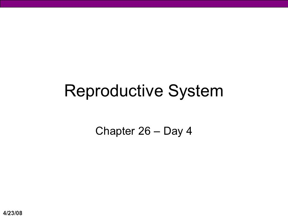 4/23/08 Reproductive System Chapter 26 – Day 4