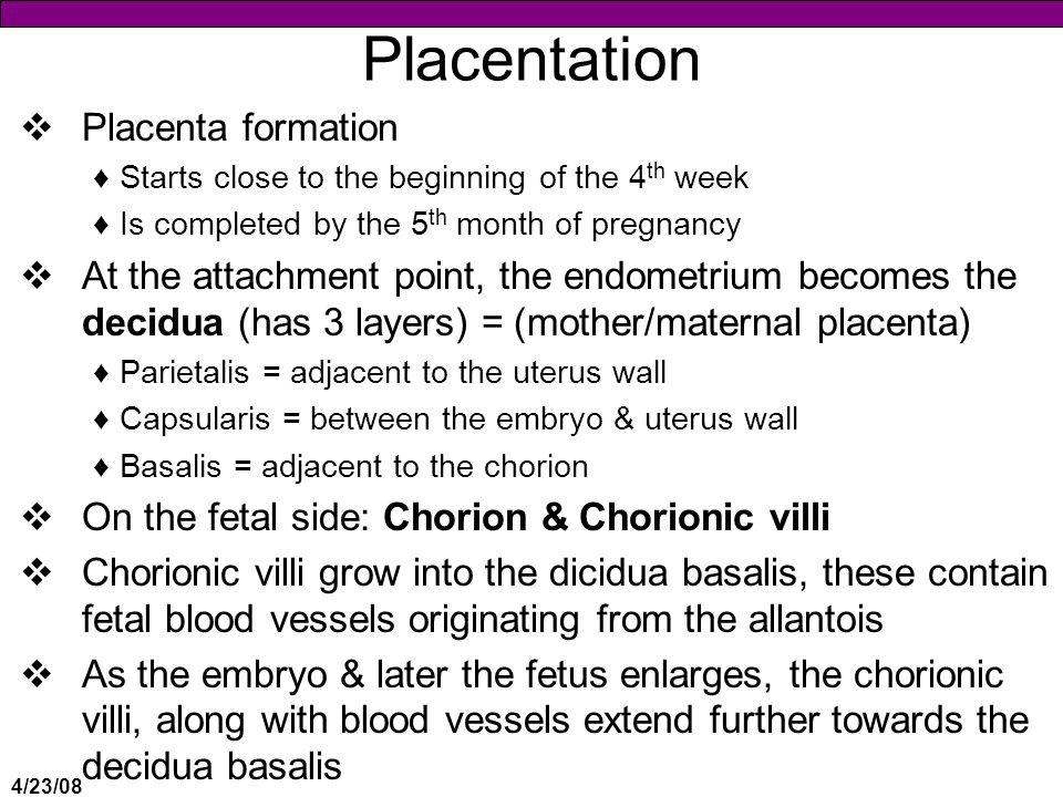 4/23/08 Placentation  Placenta formation ♦Starts close to the beginning of the 4 th week ♦Is completed by the 5 th month of pregnancy  At the attachment point, the endometrium becomes the decidua (has 3 layers) = (mother/maternal placenta) ♦Parietalis = adjacent to the uterus wall ♦Capsularis = between the embryo & uterus wall ♦Basalis = adjacent to the chorion  On the fetal side: Chorion & Chorionic villi  Chorionic villi grow into the dicidua basalis, these contain fetal blood vessels originating from the allantois  As the embryo & later the fetus enlarges, the chorionic villi, along with blood vessels extend further towards the decidua basalis
