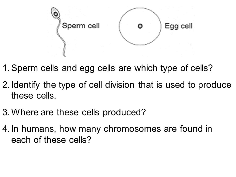 1.Sperm cells and egg cells are which type of cells? 2.Identify the type of cell division that is used to produce these cells. 3.Where are these cells