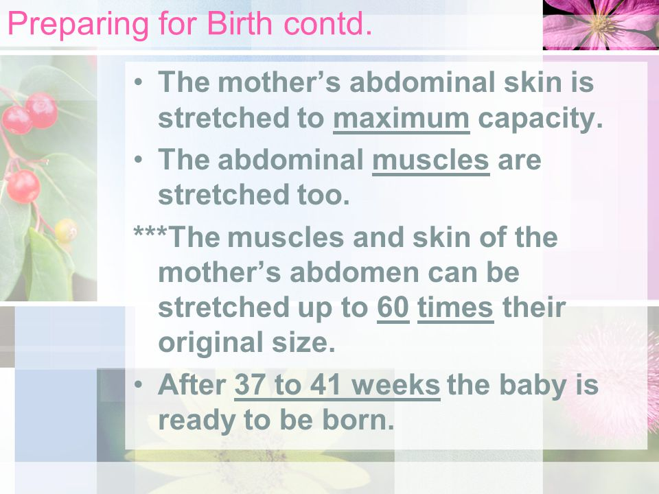 Preparing for Birth contd. The mother's abdominal skin is stretched to maximum capacity.