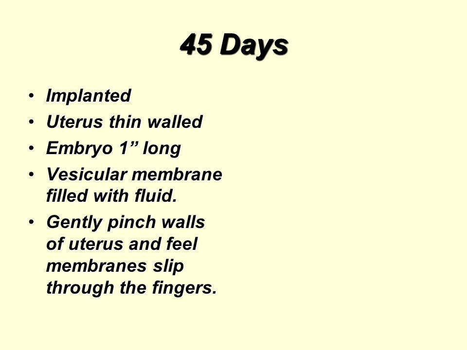 45 Days ImplantedImplanted Uterus thin walledUterus thin walled Embryo 1 longEmbryo 1 long Vesicular membrane filled with fluid.Vesicular membrane filled with fluid.