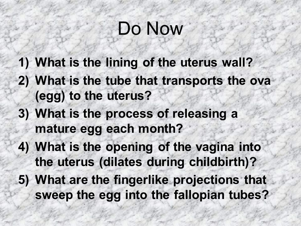 Do Now 1)What is the lining of the uterus wall.
