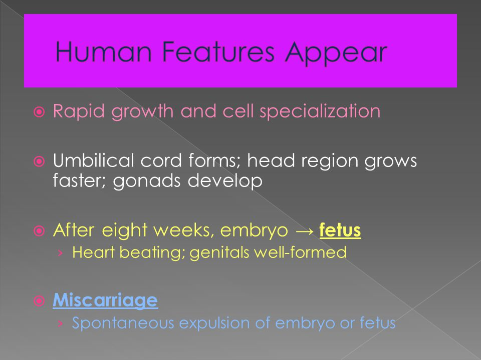  Rapid growth and cell specialization  Umbilical cord forms; head region grows faster; gonads develop  After eight weeks, embryo → fetus › Heart beating; genitals well-formed  Miscarriage › Spontaneous expulsion of embryo or fetus