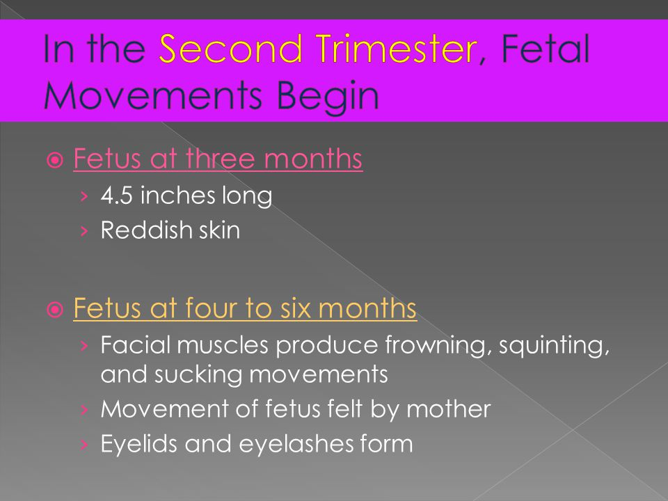  Fetus at three months › 4.5 inches long › Reddish skin  Fetus at four to six months › Facial muscles produce frowning, squinting, and sucking movements › Movement of fetus felt by mother › Eyelids and eyelashes form