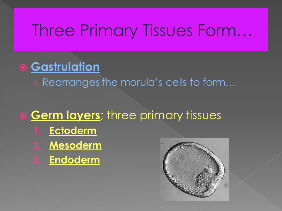 Focus: During implantation and over the next few weeks, four specialized membranes form outside the embryo.