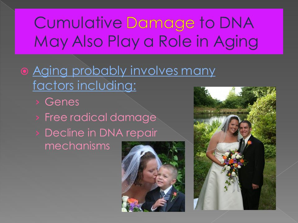  Aging probably involves many factors including: › Genes › Free radical damage › Decline in DNA repair mechanisms