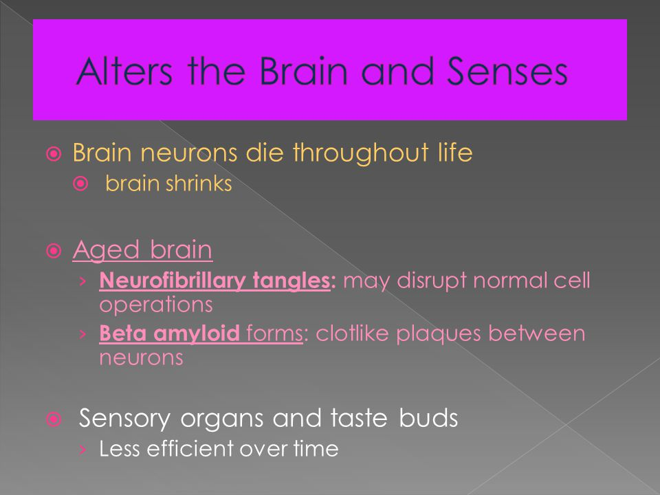  Brain neurons die throughout life  brain shrinks  Aged brain › Neurofibrillary tangles: may disrupt normal cell operations › Beta amyloid forms: clotlike plaques between neurons  Sensory organs and taste buds › Less efficient over time