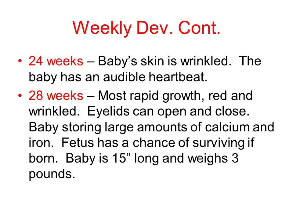 Weekly Dev. Cont. 24 weeks – Baby's skin is wrinkled.