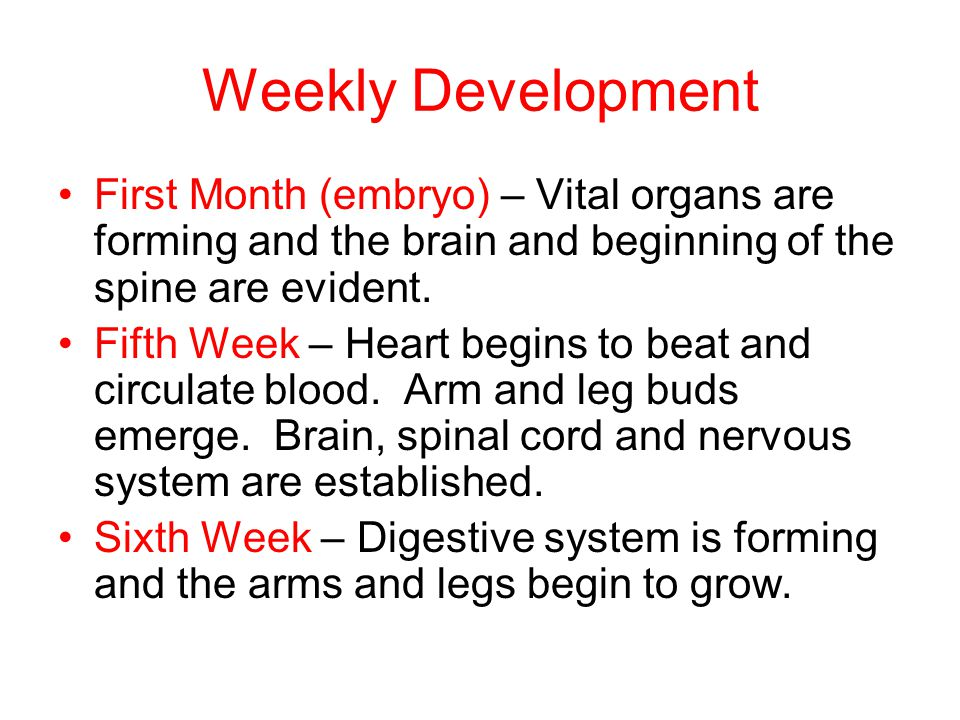 Weekly Development First Month (embryo) – Vital organs are forming and the brain and beginning of the spine are evident.