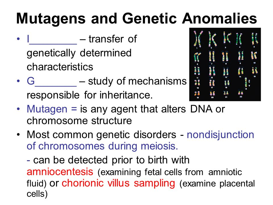 Mutagens and Genetic Anomalies I________ – transfer of genetically determined characteristics G_______ – study of mechanisms responsible for inheritance.