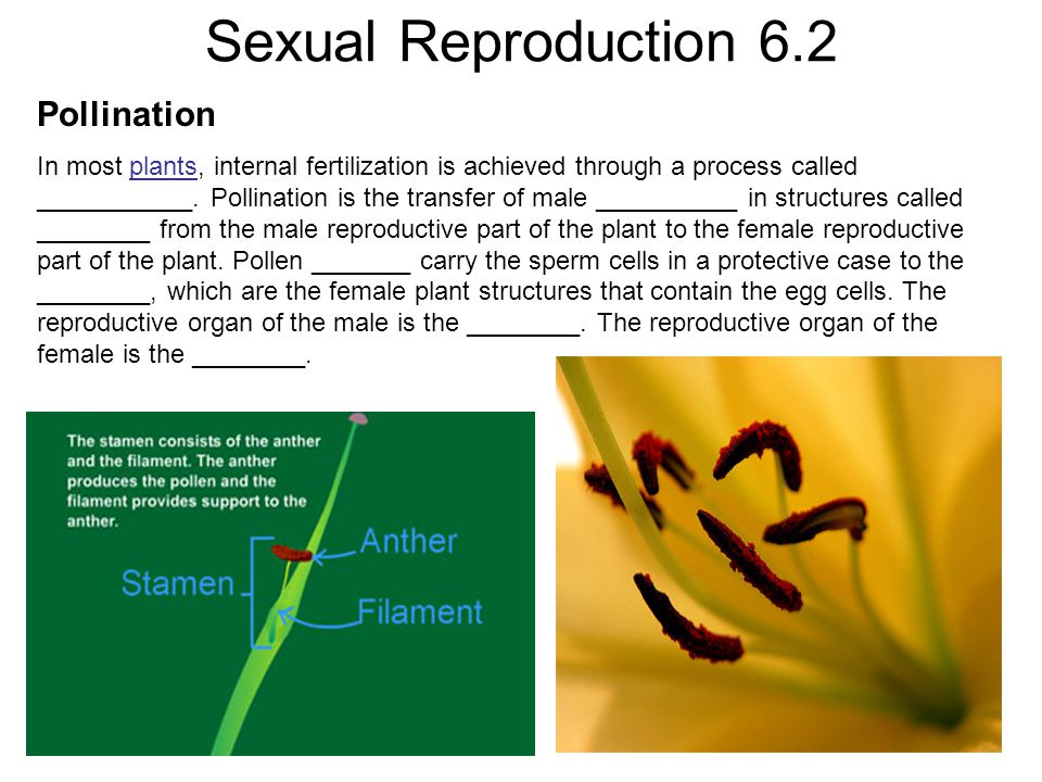 Sexual Reproduction 6.2 Pollination In most plants, internal fertilization is achieved through a process called ___________. Pollination is the transf