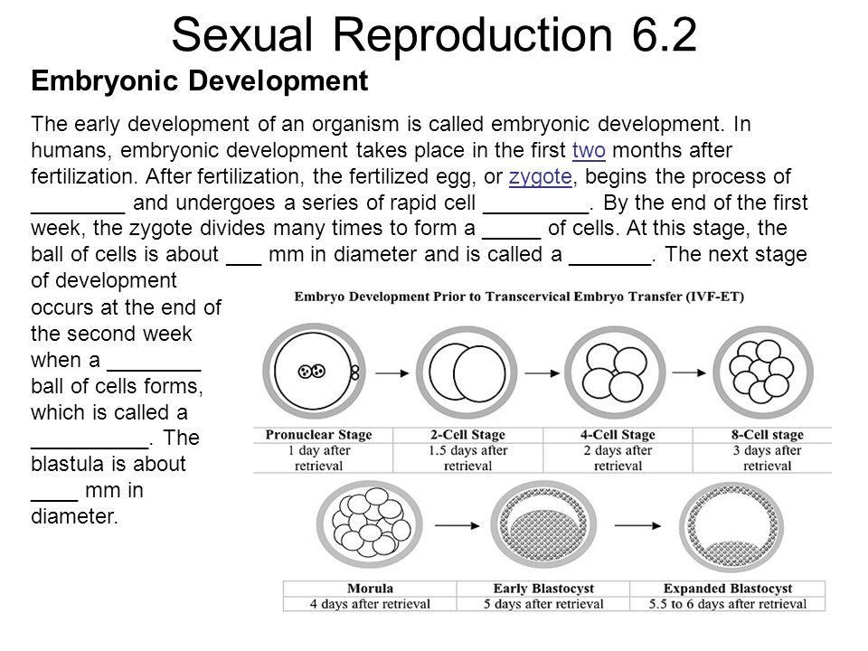 Sexual Reproduction 6.2 Embryonic Development The early development of an organism is called embryonic development. In humans, embryonic development t