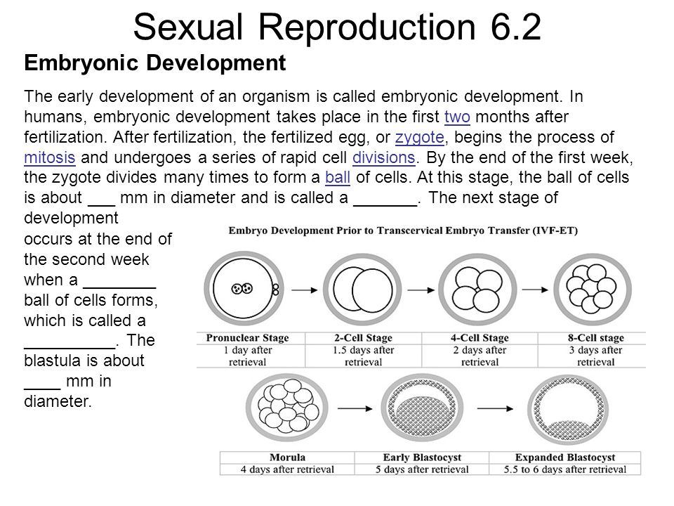 Sexual Reproduction 6.2 Embryonic Development The early development of an organism is called embryonic development.