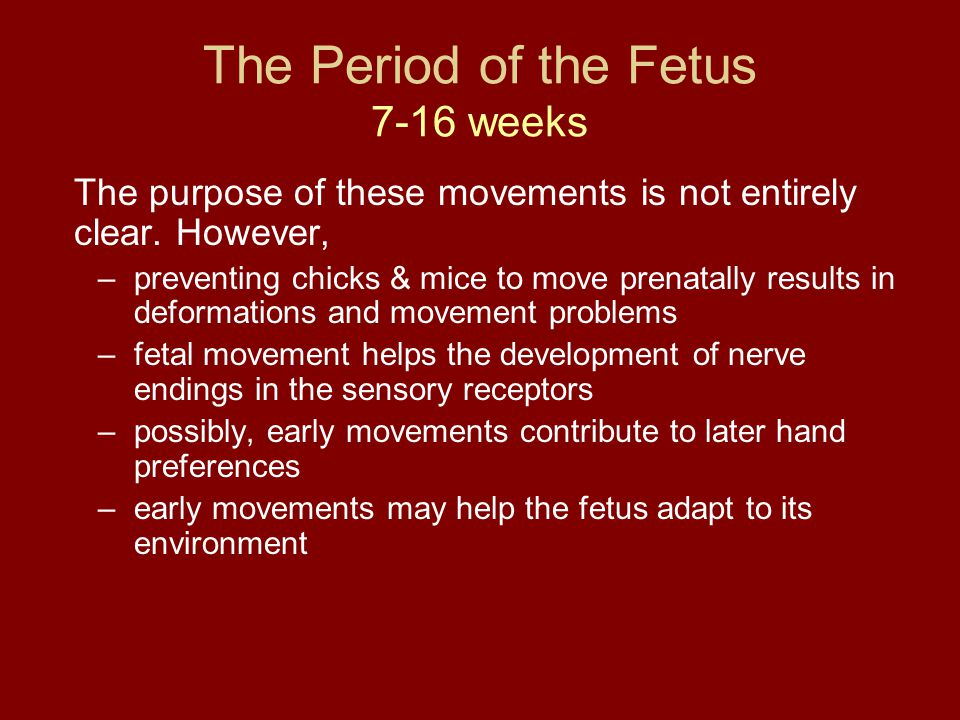 The Period of the Fetus 7-16 weeks The purpose of these movements is not entirely clear. However, –preventing chicks & mice to move prenatally results