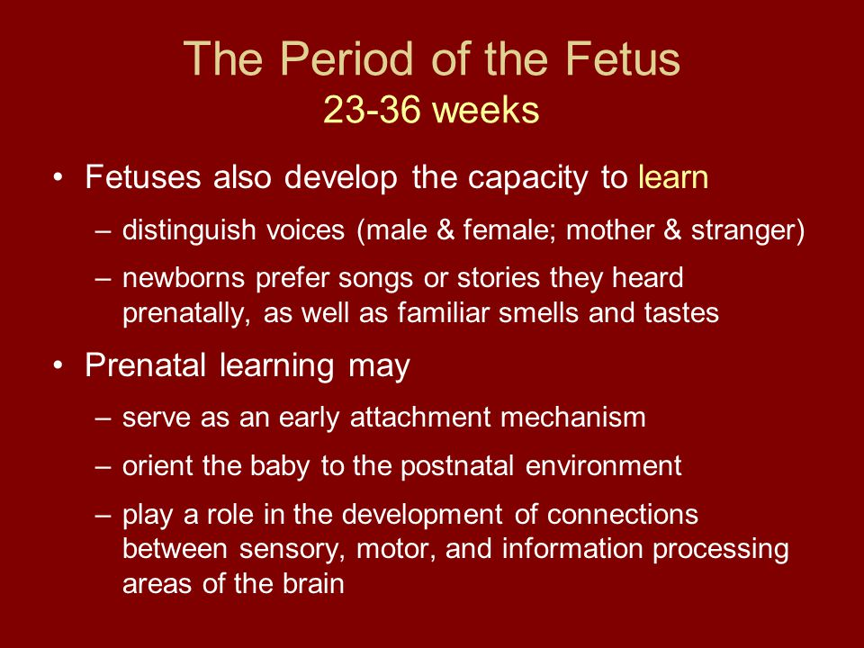 The Period of the Fetus 23-36 weeks Fetuses also develop the capacity to learn –distinguish voices (male & female; mother & stranger) –newborns prefer