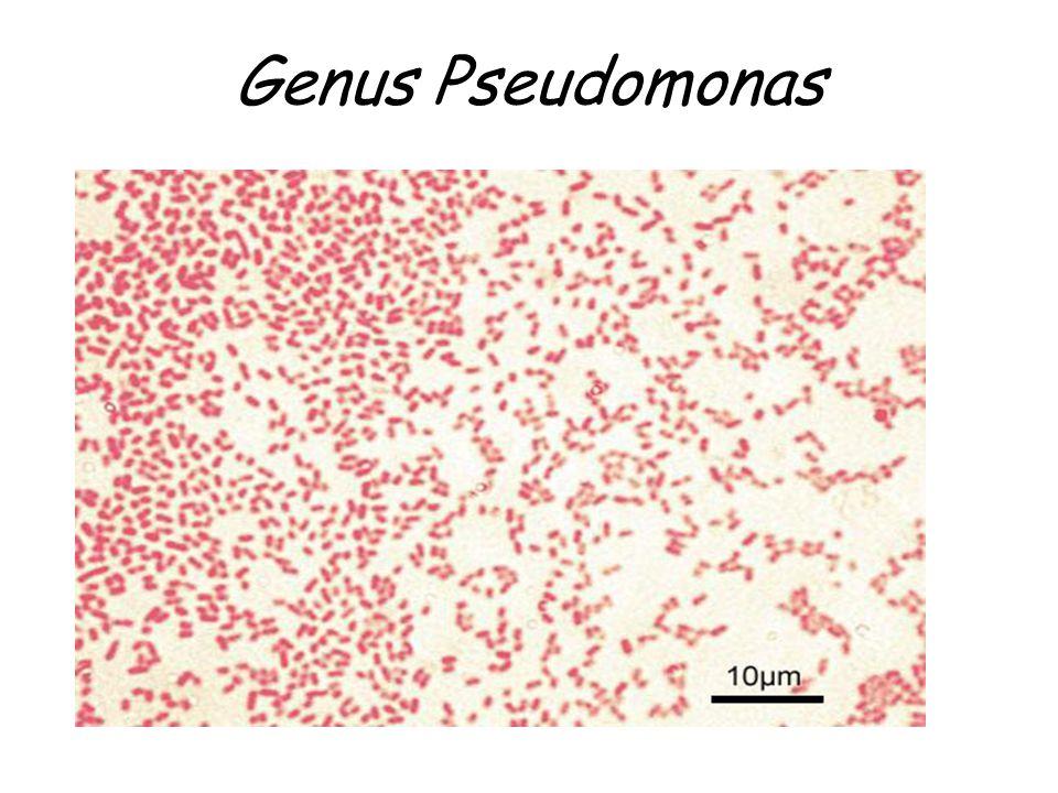 Genus Pseudomonas