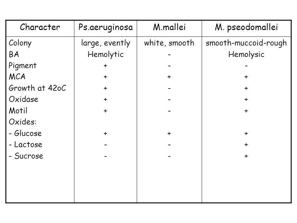 CharacterPs.aeruginosaM.malleiM. pseodomallei Colony BA Pigment MCA Growth at 42oC Oxidase Motil Oxides: - Glucose - Lactose - Sucrose large, evently