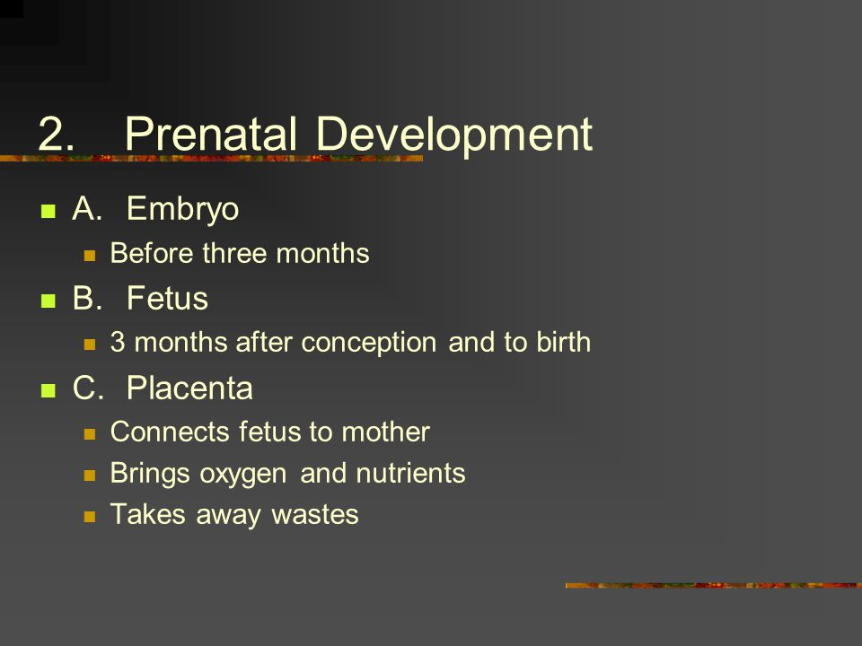 2.Prenatal Development A.Embryo Before three months B.Fetus 3 months after conception and to birth C.Placenta Connects fetus to mother Brings oxygen and nutrients Takes away wastes