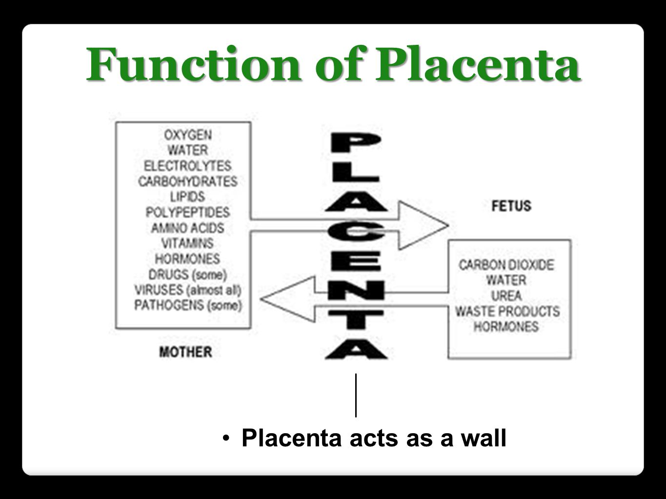 Placenta acts as a wall between mother s blood and fetus
