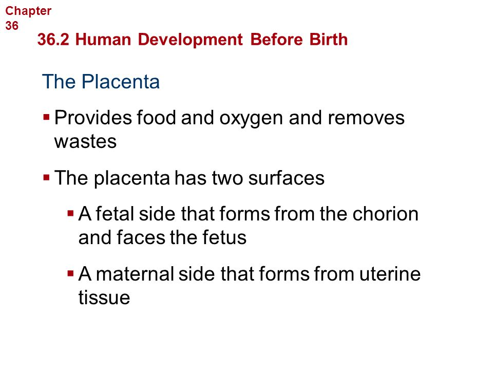Human Reproduction and Development The Placenta  Provides food and oxygen and removes wastes  The placenta has two surfaces  A fetal side that form