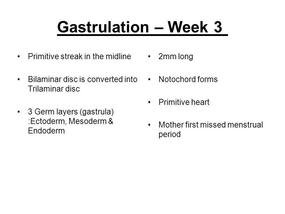 Gastrulation – Week 3 Primitive streak in the midline Bilaminar disc is converted into Trilaminar disc 3 Germ layers (gastrula) :Ectoderm, Mesoderm &
