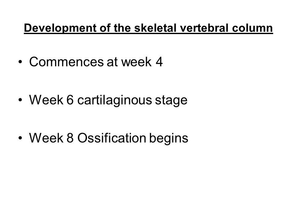 Development of the skeletal vertebral column Commences at week 4 Week 6 cartilaginous stage Week 8 Ossification begins