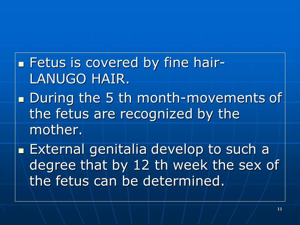 11 Fetus is covered by fine hair- LANUGO HAIR. Fetus is covered by fine hair- LANUGO HAIR.