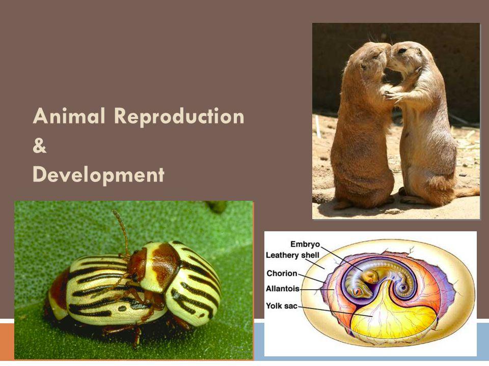 2007-2008 Animal Reproduction & Development