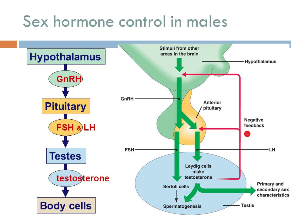 Reproductive hormones 5/3/2015  Testosterone  from testes  functions sperm production 2° sexual characteristics  Estrogen  from ovaries  functio