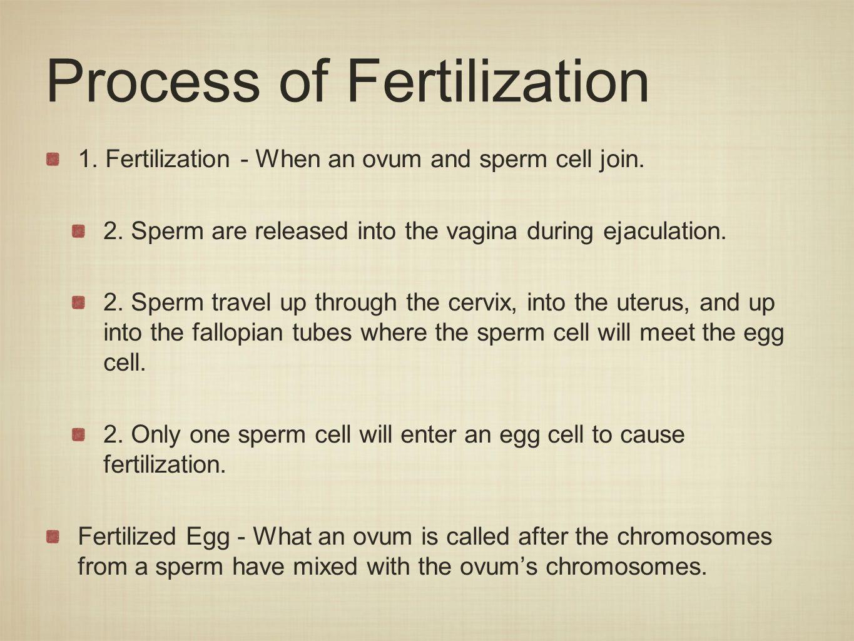 Implantation 1.