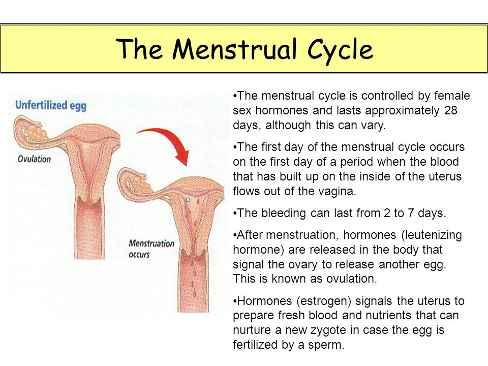 The Menstrual Cycle The menstrual cycle is controlled by female sex hormones and lasts approximately 28 days, although this can vary.