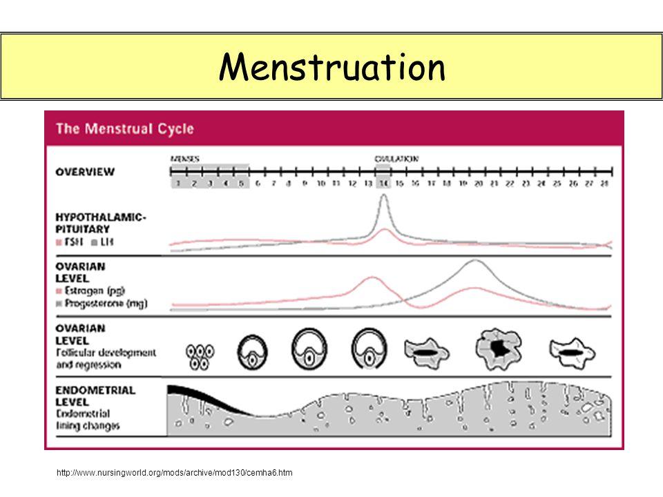 Menstruation http://www.nursingworld.org/mods/archive/mod130/cemha6.htm