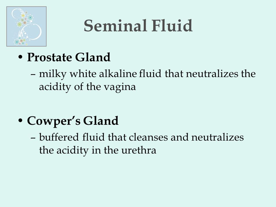 Seminal Fluid Prostate Gland –milky white alkaline fluid that neutralizes the acidity of the vagina Cowper's Gland –buffered fluid that cleanses and n