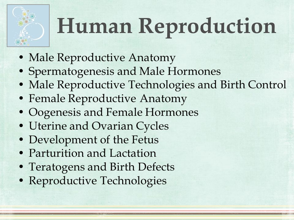 Male Reproductive Anatomy Spermatogenesis and Male Hormones Male Reproductive Technologies and Birth Control Female Reproductive Anatomy Oogenesis and