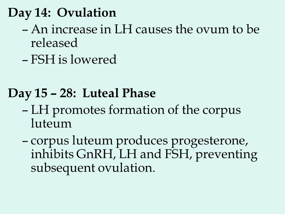 Day 14: Ovulation –An increase in LH causes the ovum to be released –FSH is lowered Day 15 – 28: Luteal Phase –LH promotes formation of the corpus lut