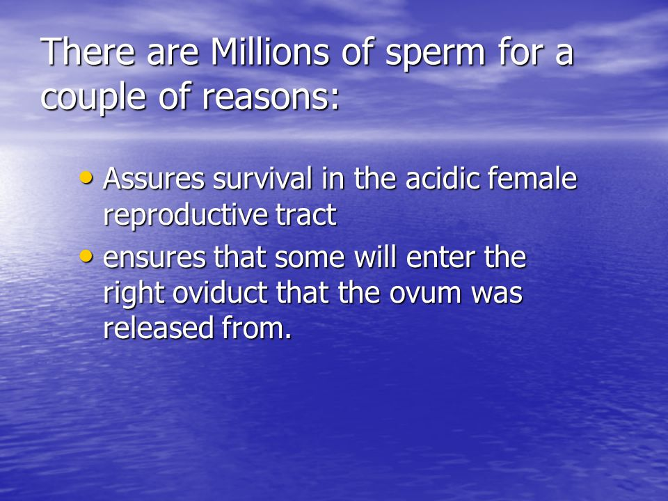 Fertilization Millions of sperm enter the vagina and swim into the oviducts Millions of sperm enter the vagina and swim into the oviducts Why are there so many sperm for the one egg you may ask.