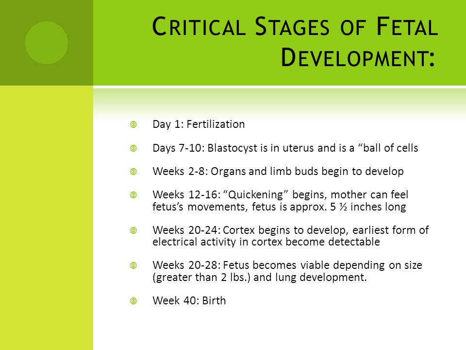 C RITICAL S TAGES OF F ETAL D EVELOPMENT :  Day 1: Fertilization  Days 7-10: Blastocyst is in uterus and is a ball of cells  Weeks 2-8: Organs and limb buds begin to develop  Weeks 12-16: Quickening begins, mother can feel fetus's movements, fetus is approx.